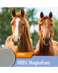 HBD's® MAGNO FUM
